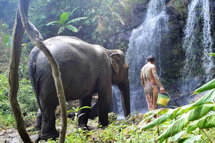 chiang-mai-olifanten.jpg